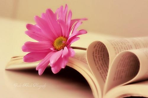 book_flower_heart_pastel_weheartit_favim_com_269354_1438132061