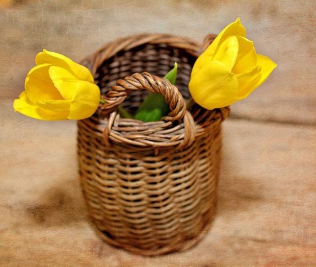 tulips-709585_960_720